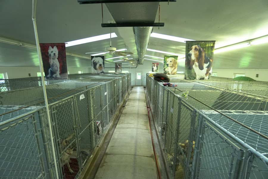 Sorenson Kennels Dog Boarding