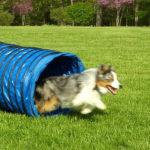 Outdoor Dog Agility Training
