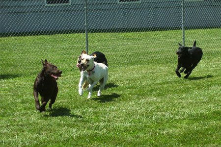 Dog Playing at Daycare