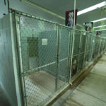 Dog Boarding at Sorenson Kennels