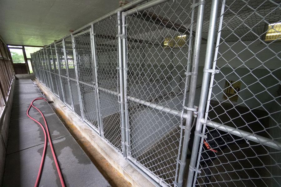 Dog Boarding St Charles Dog Kennels Dog Daycare