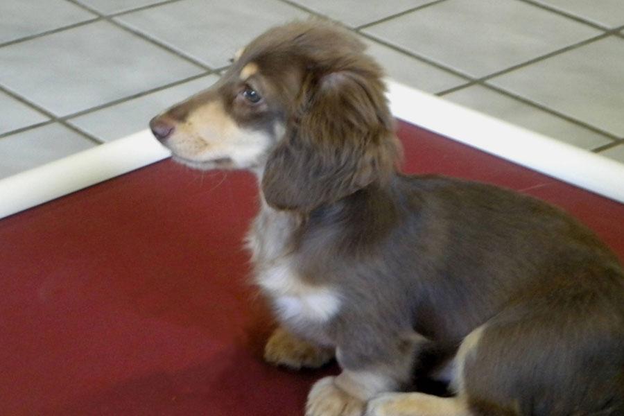 Dog Obedience Classes, Dog Training, Sorenson Kennels