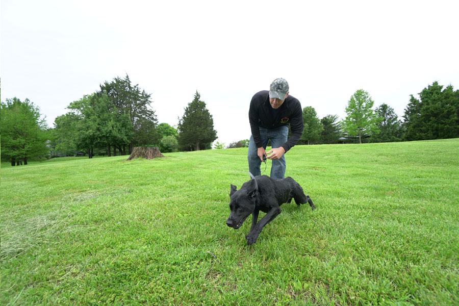 Dog Obedience Training St Peters Mo