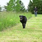 Sorenson Kennels Retriever Training