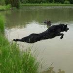 Hunting Dog Retrieving Item