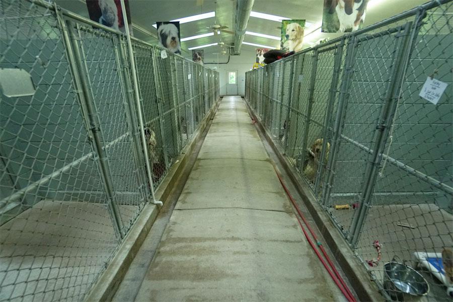 p-dog-boarding-all-indoor-01