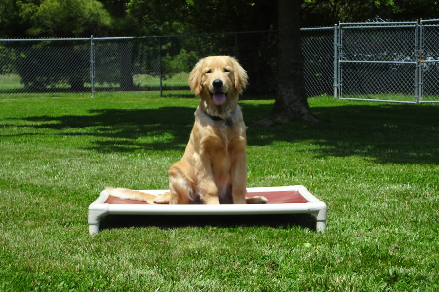 p-obedience-training-01-1