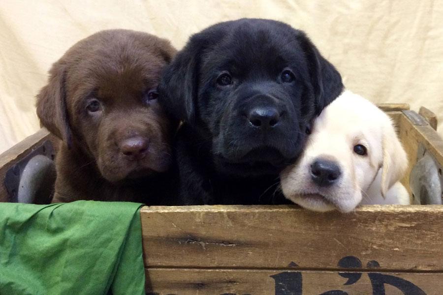 p-puppies-02