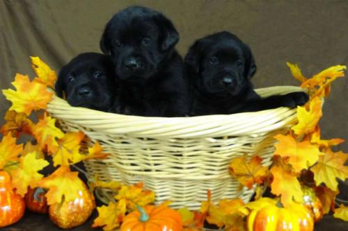 p-puppies-01