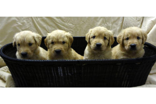 p-puppies-03