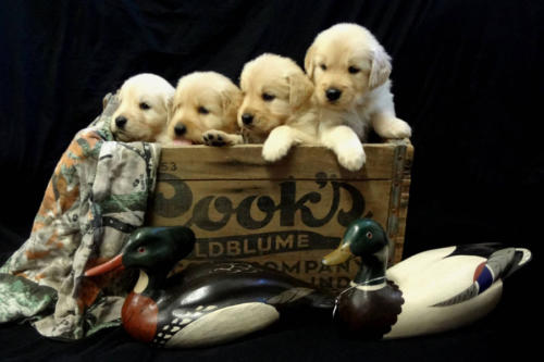 p-puppies-04